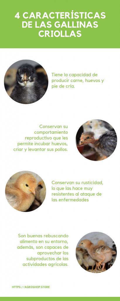 características gallinas criollas